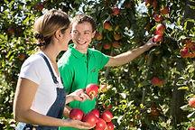 OPST Partner Steiermark GmbH