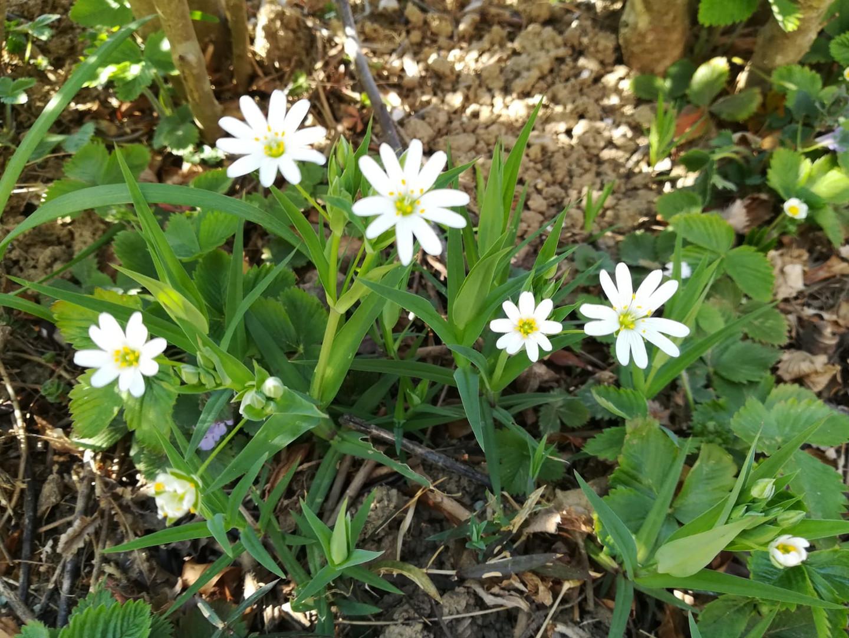 Blütenweiß - JK