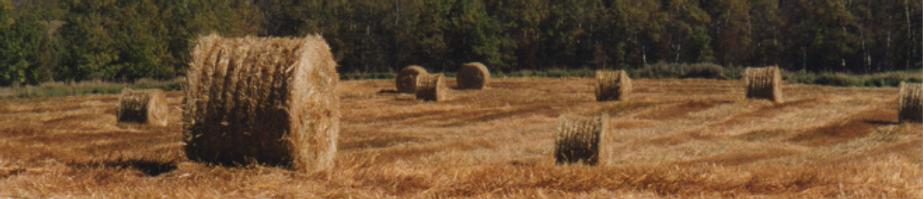 Round bales in farm field