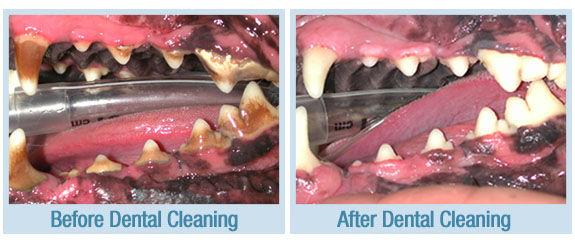 dog dental.jpg