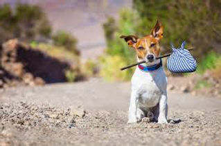 microchip dog.jpg