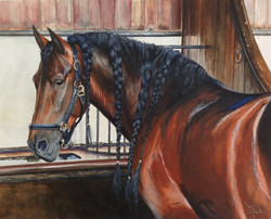 The Spanish Stallion
