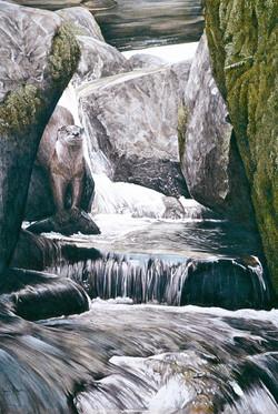The Journey Downstream