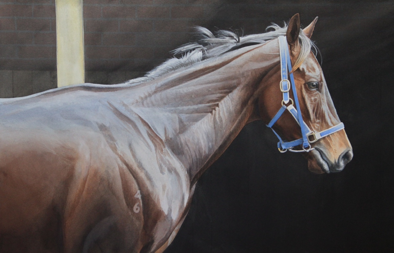 Champion - Black Caviar