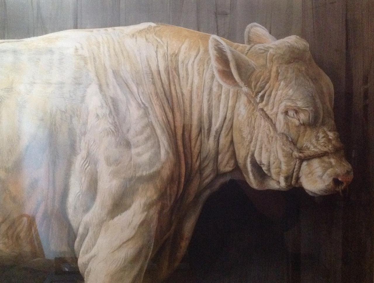 Bull(I)