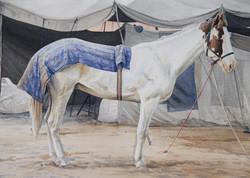 Marwan Horse II