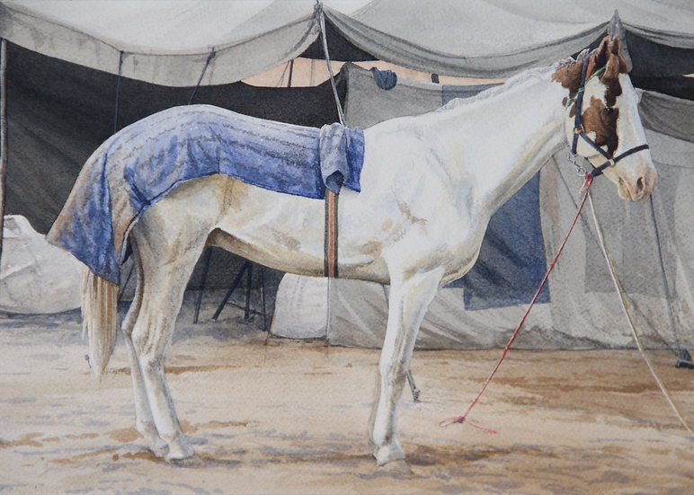 Marwar Horse