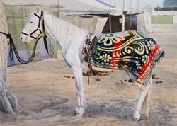 Marwar Horse I