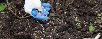 Tree Fertilization & Tree Care