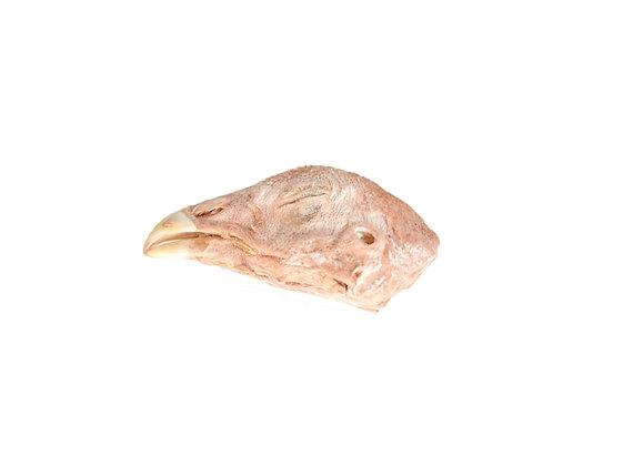 Head Set | Probiotic Chicken Head