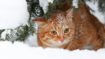 Surviving The Winter: How To Help Homeless Pets Left Out In The Cold