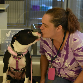 Ask the SPCA Trainer