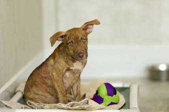 Turning Forgotten Dogs into Family Dogs