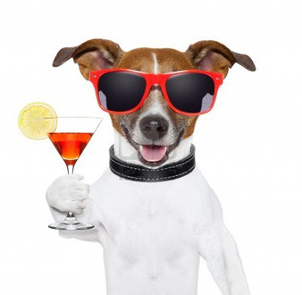 Yappy Happy Dog Days of Summer