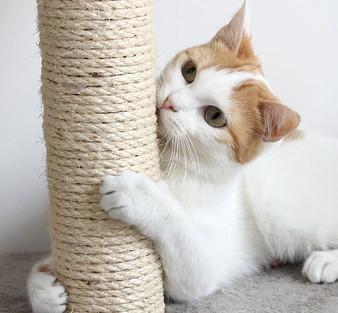 Pet Care Golden Standard