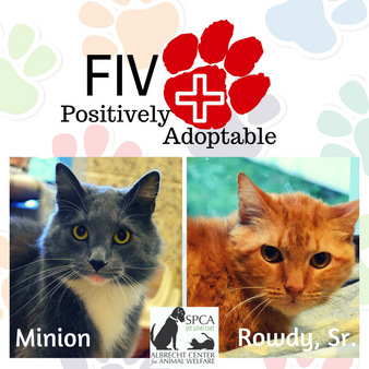 FIV Positive...ly Adoptable