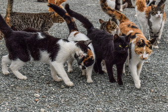 Trapping Cats to Save More Lives
