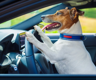 Say No to Lap Dogs Behind the Wheel