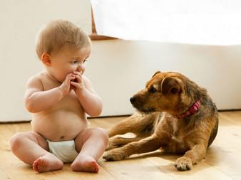 Kids vs. Dogs