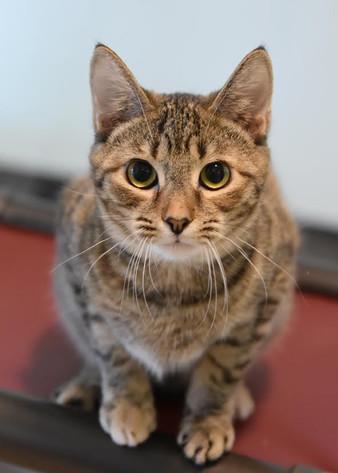 Finding Homes for Felines