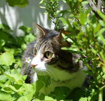 Summer Safety for Outdoor Cats