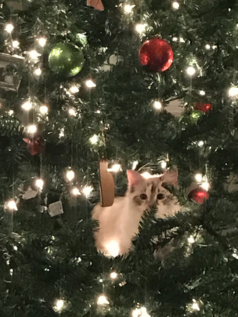 Avoiding Christmas Tree Cat-astrophe