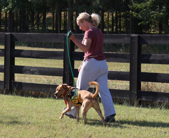 Unleash the Hidden Power of the Dog Walk