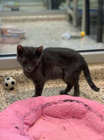 Surviving Kitten Season