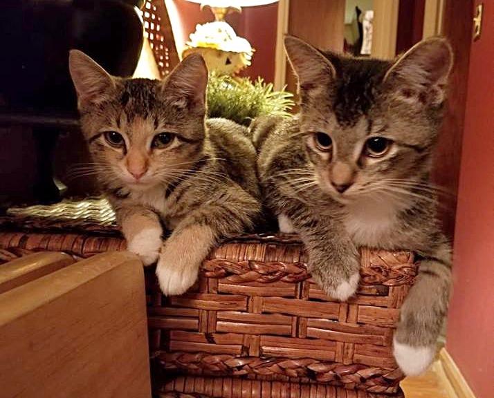 Tucker & Callie