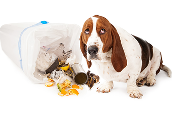 Pet-Proofing your Home for Safety