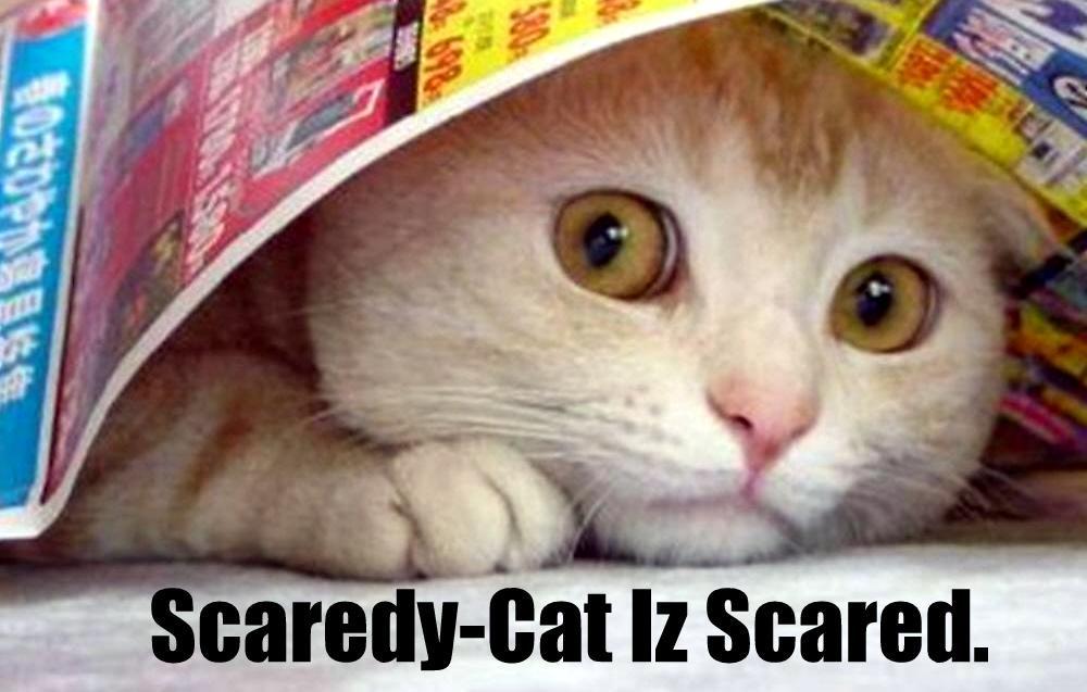 Scaredey Cat.jpg