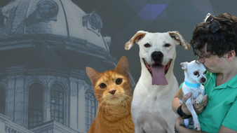 Message From Our CEO: New SC Animal Welfare Legislation Passes