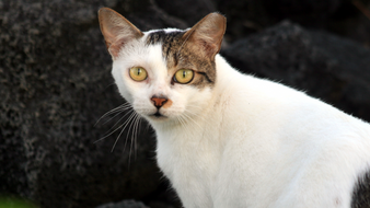 Community Cats Are A Community Responsibility