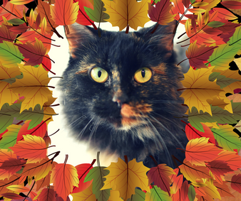 Fall for a Feline and Help Fix Overpopulation