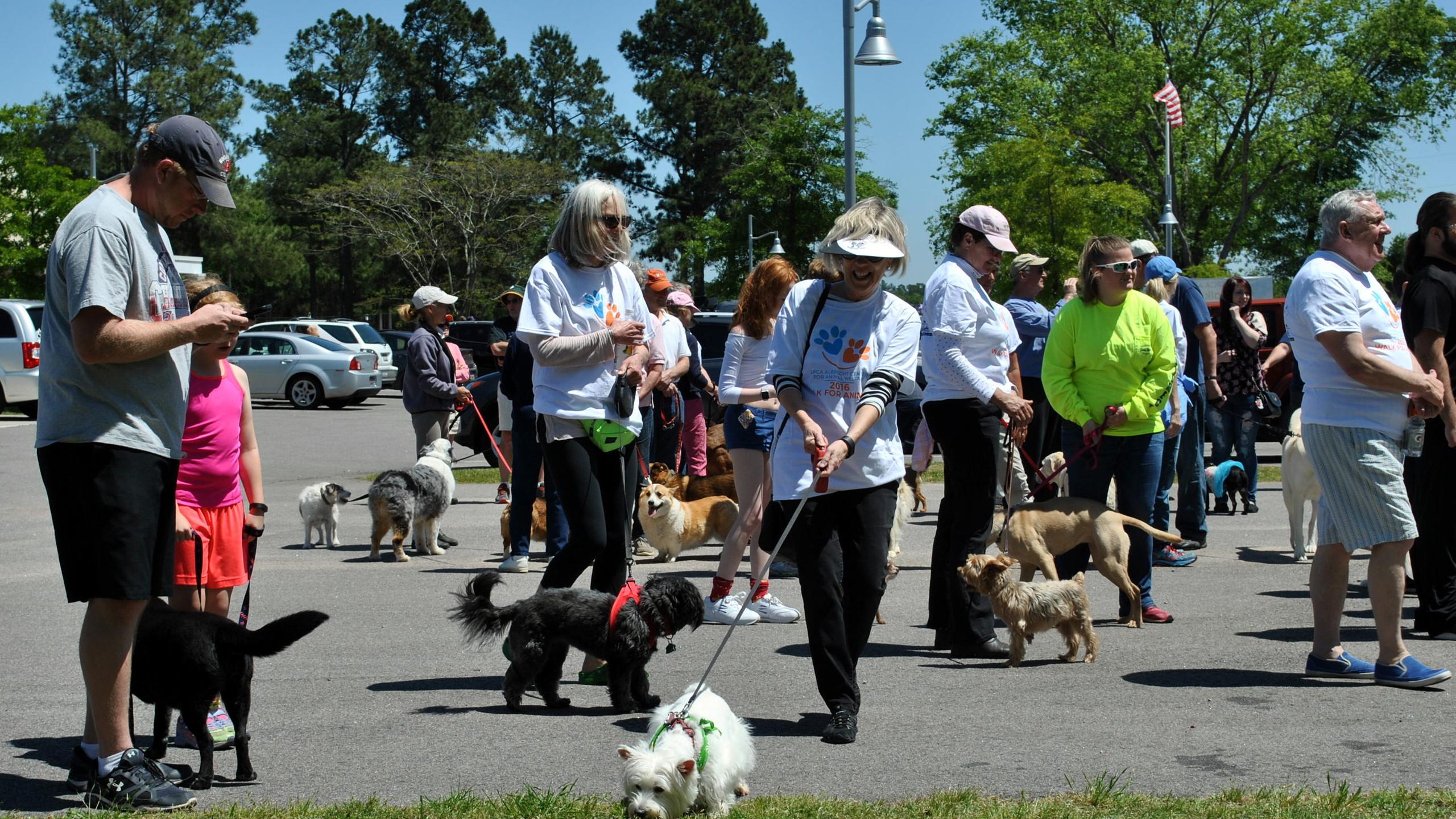 SPCA Walk for Animals 2016 (16)
