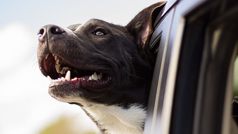 Protecting Our Pets During the Dog Days of Summer