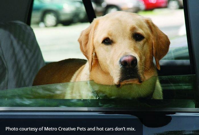 Dog in Hot Car.JPG