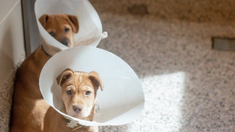 Spay & Neuter: Fact vs. Fiction
