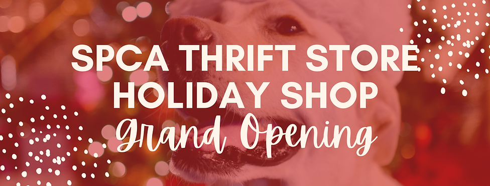 Thrift Store Party Website Header.png