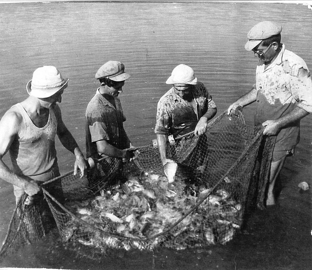 חברי הקיבוץ עובדים בבריכות הדגים