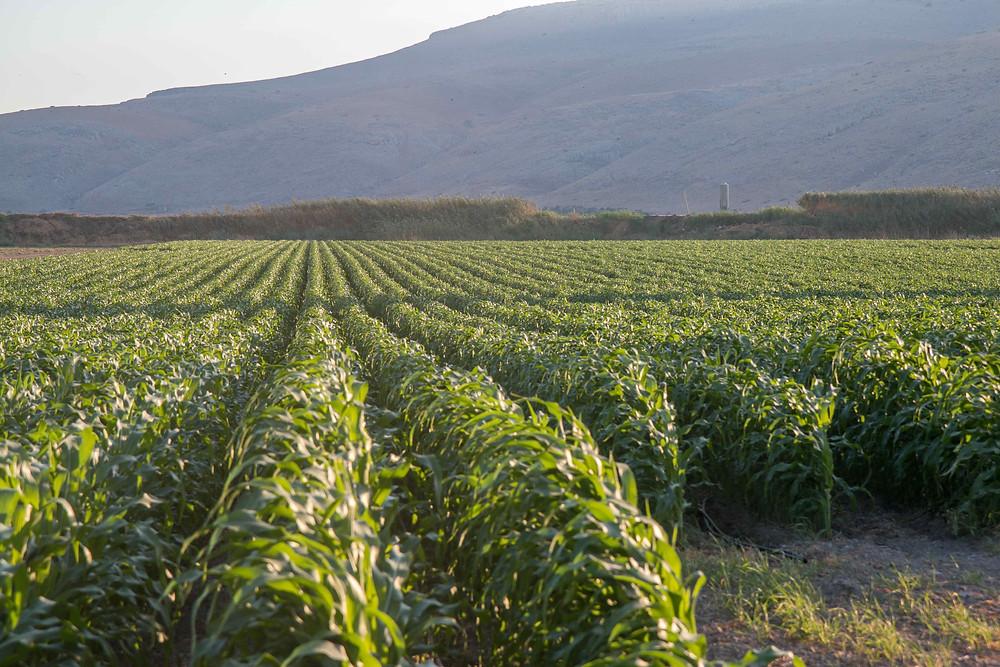 אדמות חקלאיות בעמק