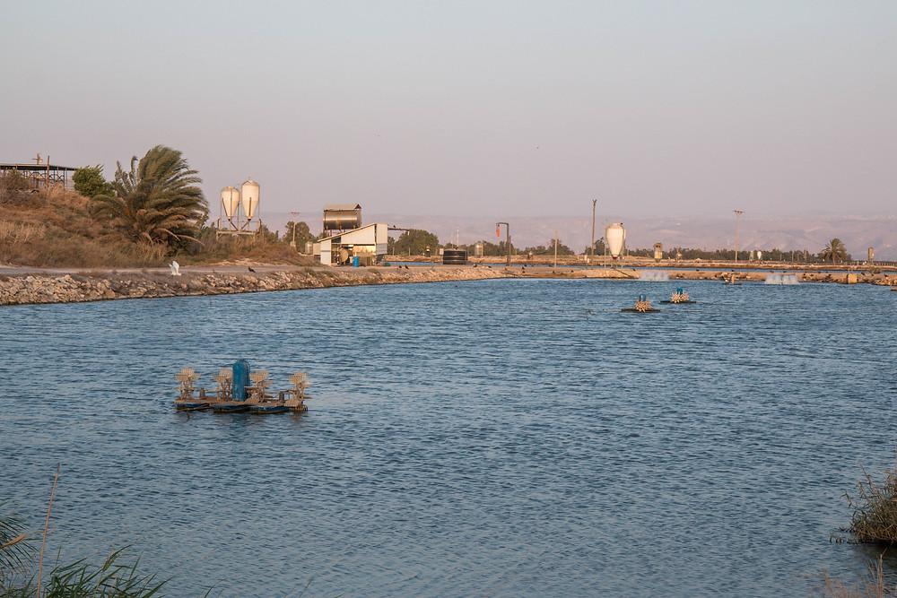 בריכות הדגים של קיבוץ ניר דוד. עצמאות באספת מזון היא ערך ציוני ראשון במעלה.