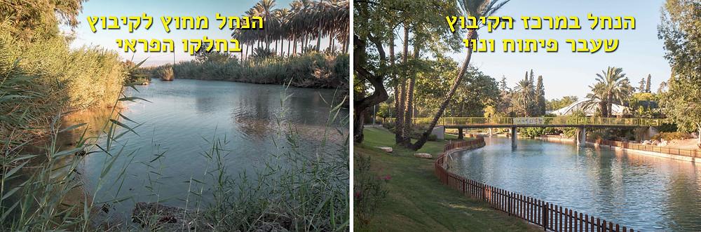 השוואה בין חלקו המטופח של הנחל שעבר טיפוח ונוי לבין חלקו הפראי הזורם מחוץ לקיבוץ
