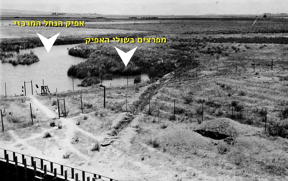 1936. מבט לנחל האסי לכיוון מזרח מחומה ומגדל. התמונה מציגה את מראה הנחל בחודש הראשון להקמת הקיבוץ. בשולי הנחל מפרצים רבים ובהם מים עומדים שורצי קדחת.