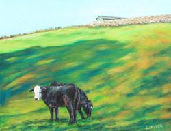Cows at Postman's Farm