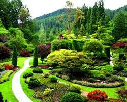 Walnut Cove Garden