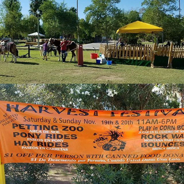 Harvest festival petting zoo