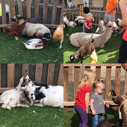 Farm animals petting zoo