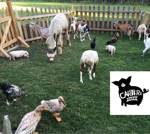 Petting zoo, farm animals