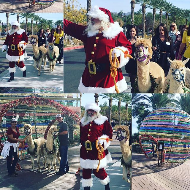 Walking with #santa today! #cartersfarmaz #christmastime #llamas #alpacas #lifedesigneventplanning #